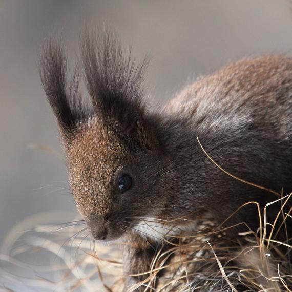 Das achte Bild – Eichhörnchen
