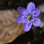 Blühten im Frühling